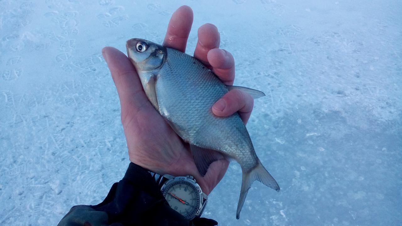 2 марта 2019 г.( суббота)д.Местечко :... Кто бы ... | Отчеты о рыбалке в Беларуси