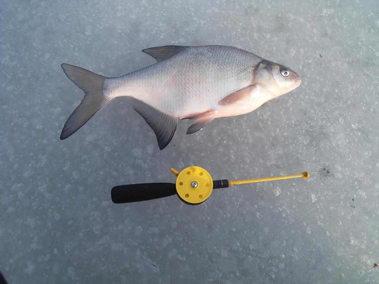День на рыбалке 7 марта. Больший на 0,7кг ... | Отчеты о рыбалке в Беларуси
