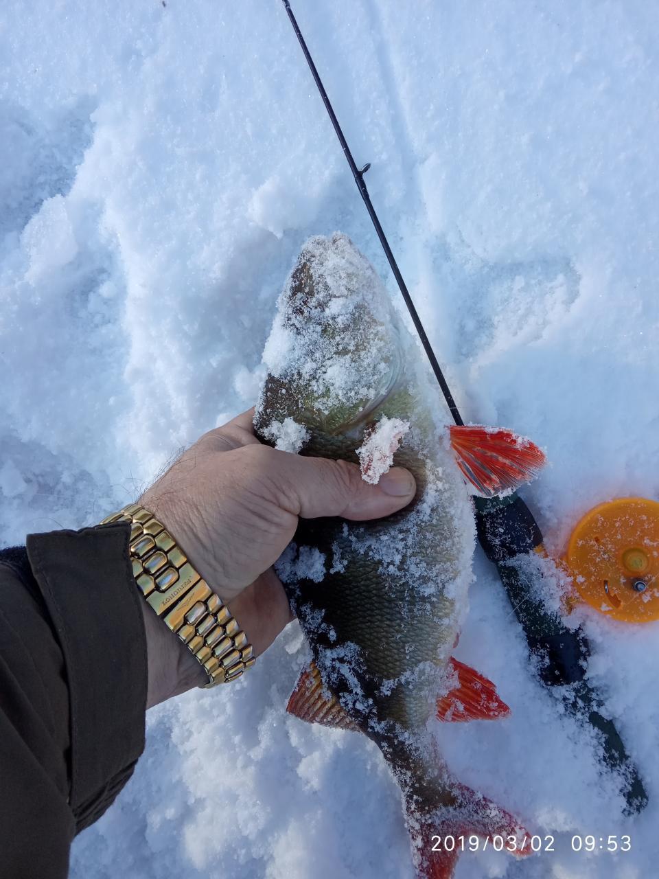 Как не стыдно, первые зимниевыходные,(да уже и не ... | Отчеты о рыбалке в Беларуси