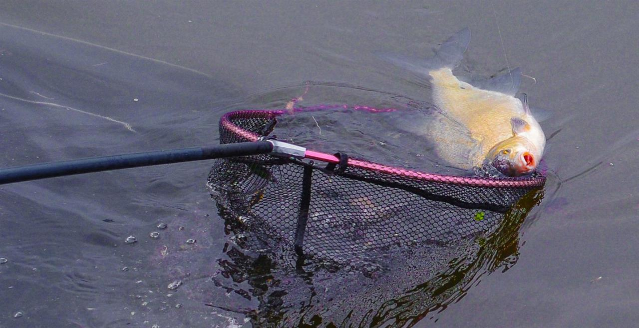 Никогда бы не подумал, что так получится открыть ... | Отчеты о рыбалке в Беларуси