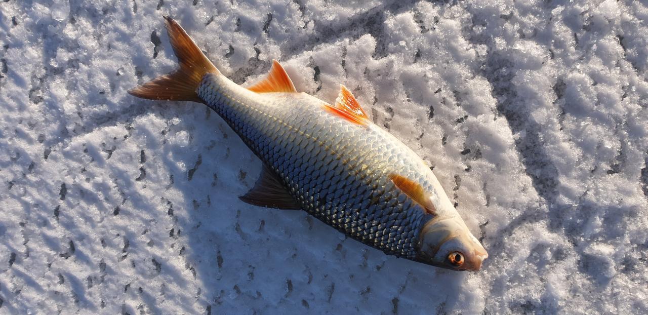 Погода сегодня была неплохая. С утра хороший морозик ... | Отчеты о рыбалке в Беларуси