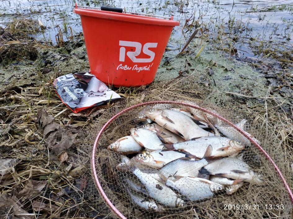 Посетил с друзьями на выходных Осиповичское водохранилище с ... | Отчеты о рыбалке в Беларуси