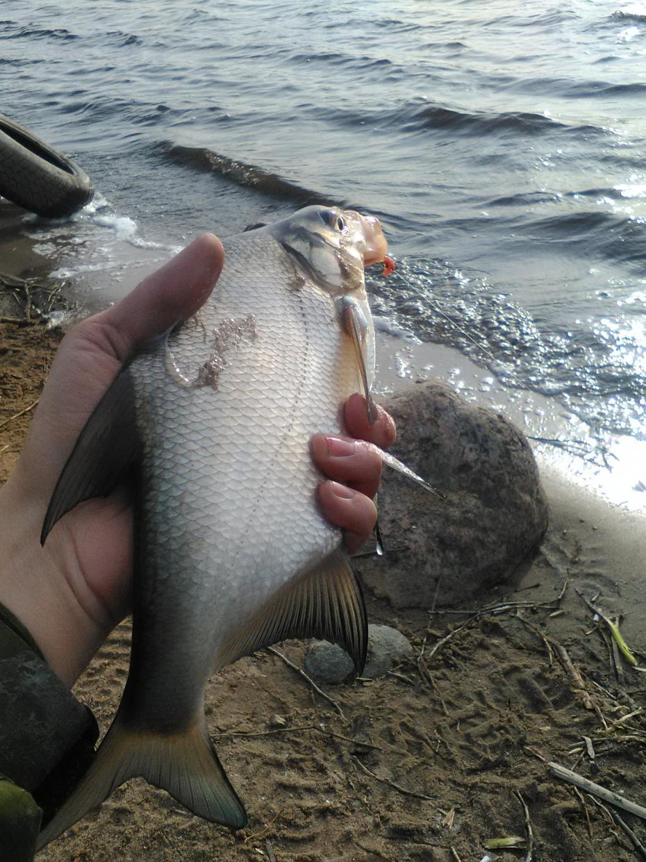 Противоречивая рыбалкаПосле посещения выставки «Охота и рыболовство» в ... | Отчеты о рыбалке в Беларуси