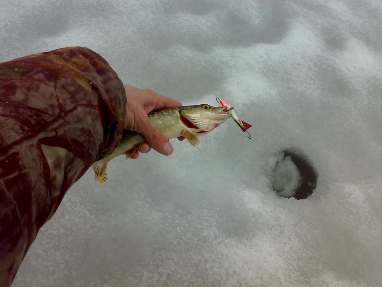 Всё, теперь, похоже, точно закрылсяСегодня с гостей приехали ... | Отчеты о рыбалке в Беларуси