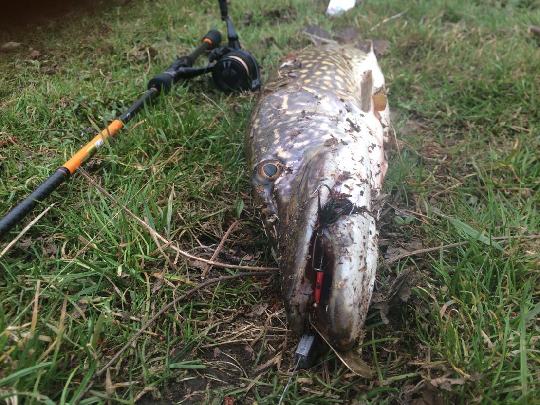 Моей целью вчера был судак . Вот за ... | Отчеты о рыбалке в Беларуси
