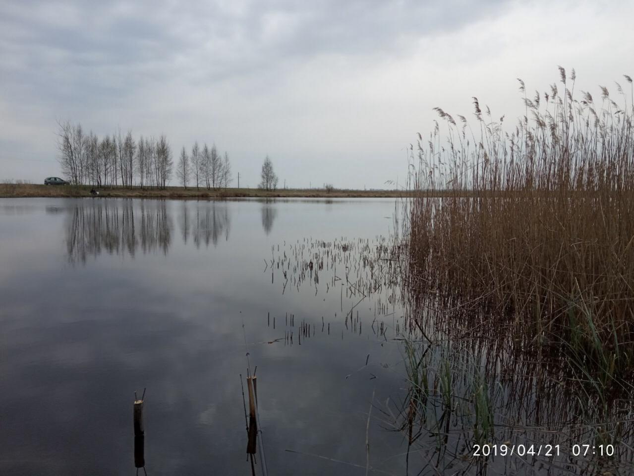 Утром к 6 уже был на пруду. Место ... | Отчеты о рыбалке в Беларуси