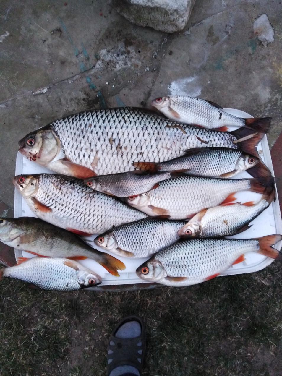 Вчера решил поехать на Неман. Наковырял шитика и ... | Отчеты о рыбалке в Беларуси