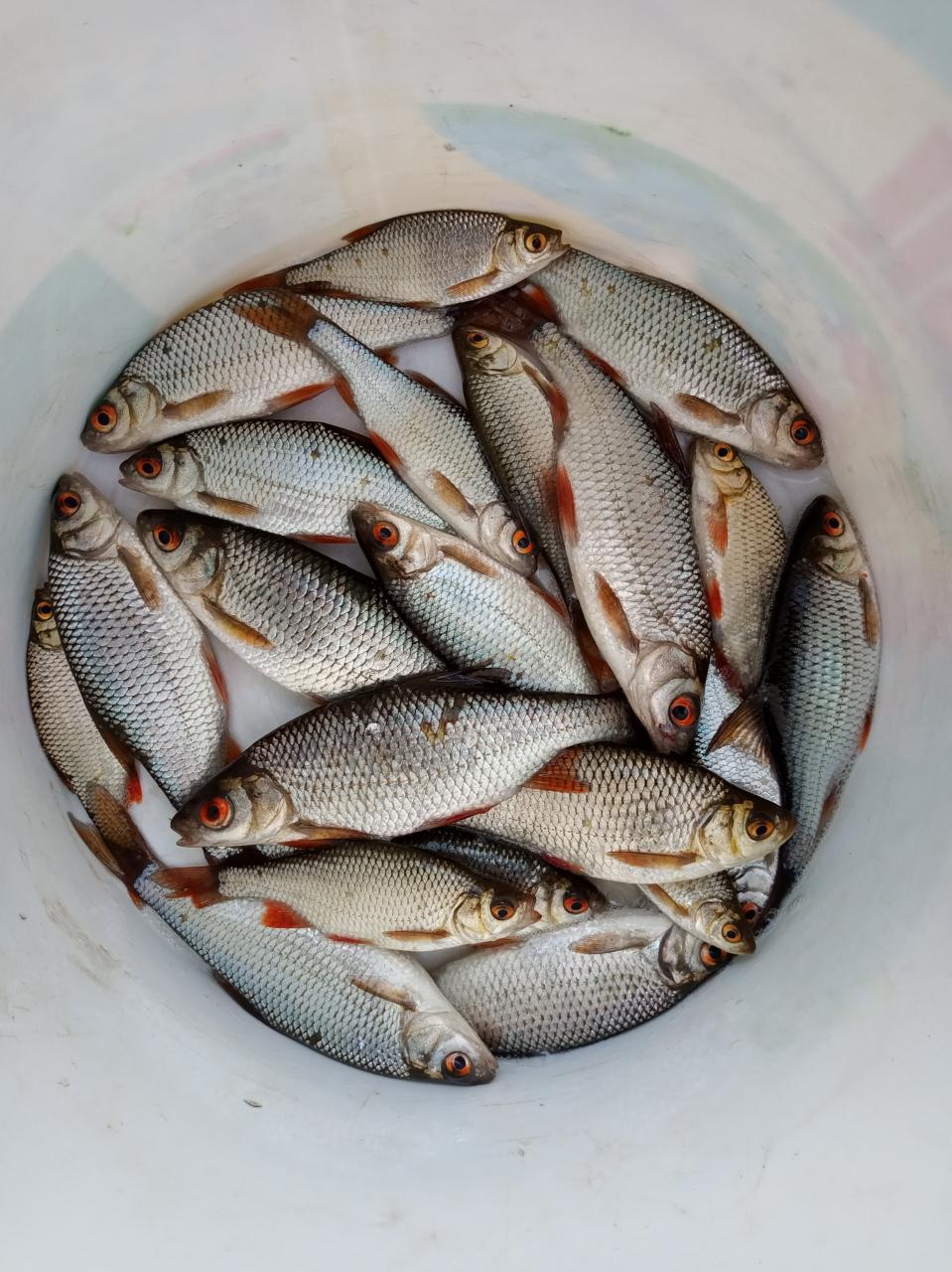 Вчера в районе обеда в верховье Вячи выбрался ... | Отчеты о рыбалке в Беларуси