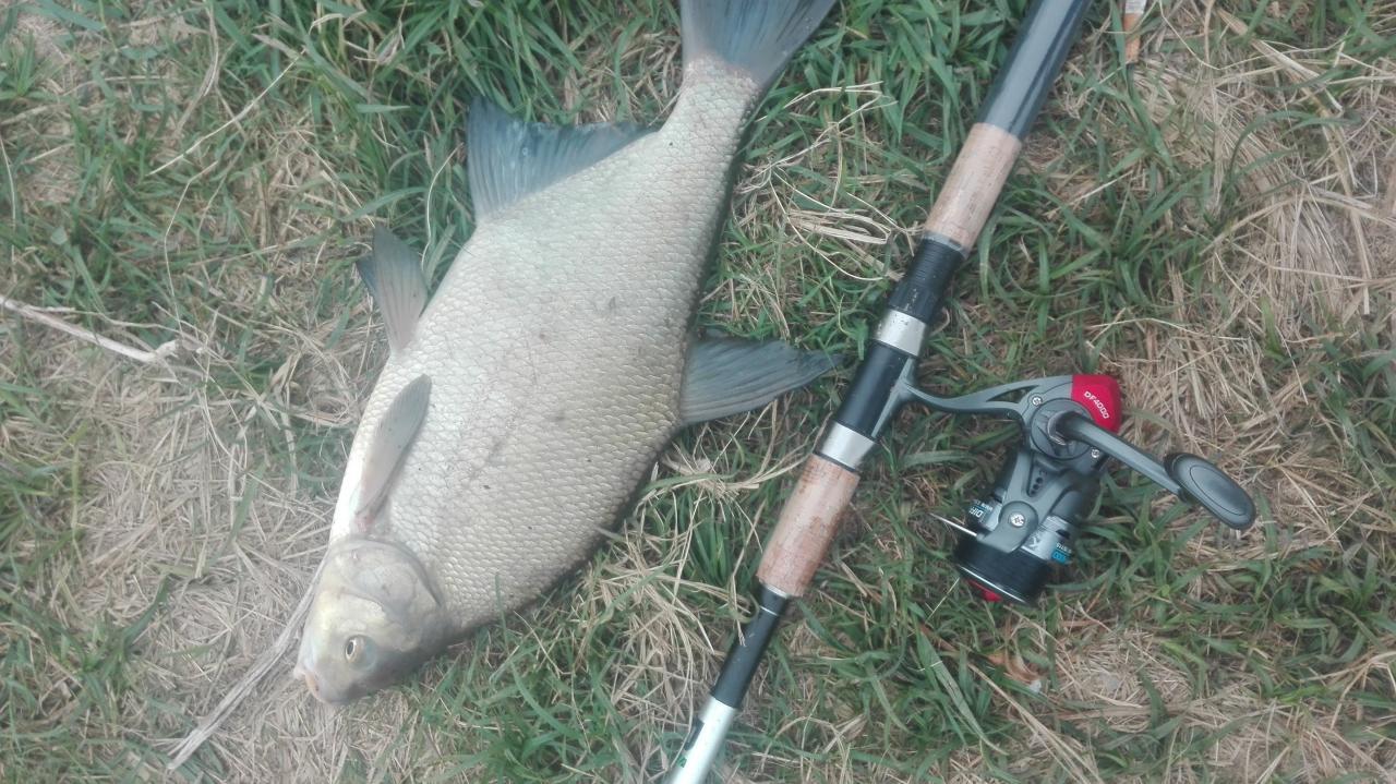 Были с понедельника на вторник, район Коробье. Фидер ... | Отчеты о рыбалке в Беларуси