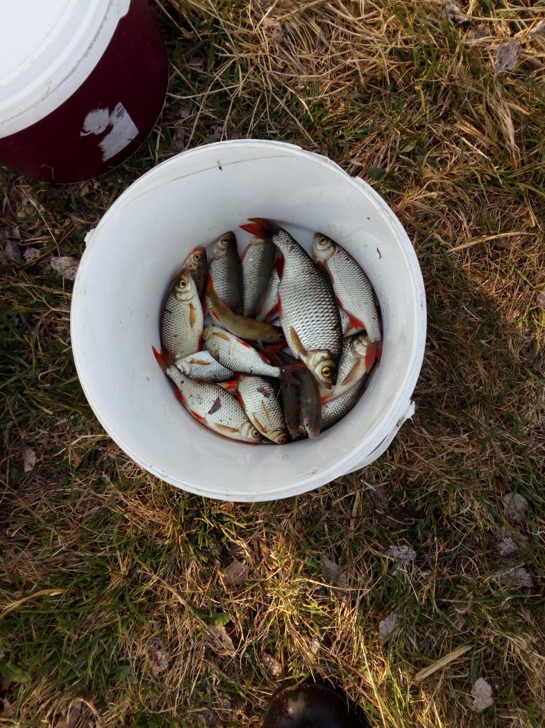 Да на море сегодня рыб не хочет брать