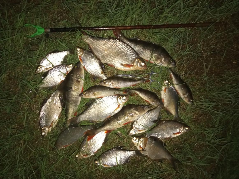 В Гомель на пару дней катались, перед поездкой ... | Отчеты о рыбалке в Беларуси