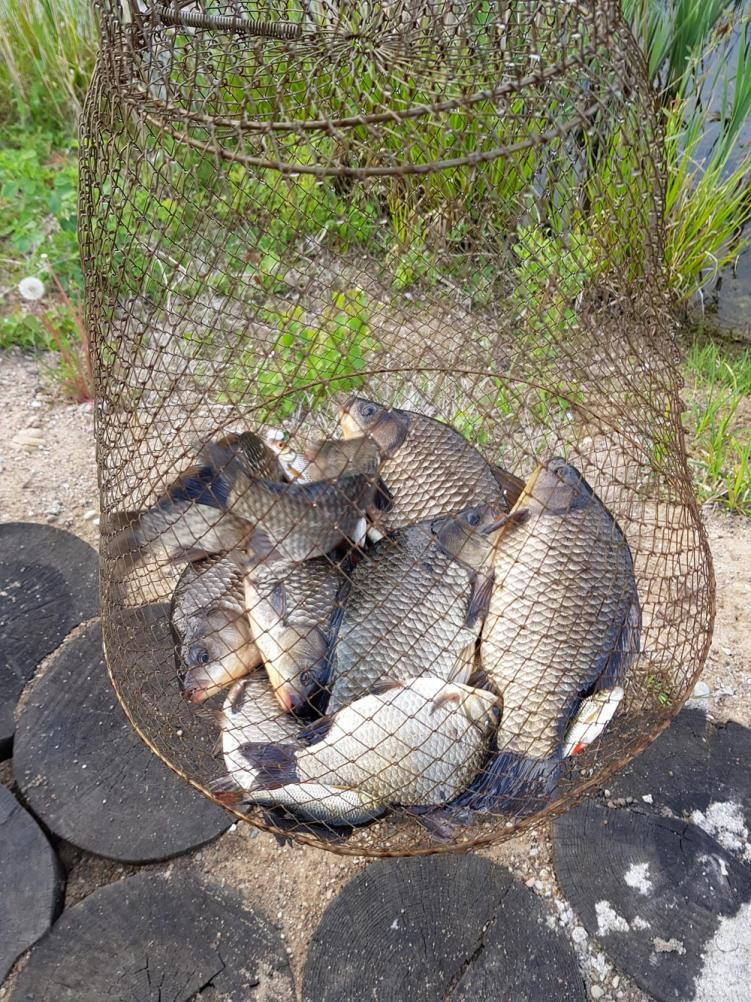 Вчера с 14, вяло, с 17 поживее. До ... | Отчеты о рыбалке в Беларуси