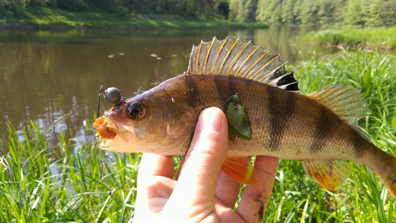 Всем привет.Только что вернулся с реки. Был в ... | Отчеты о рыбалке в Беларуси
