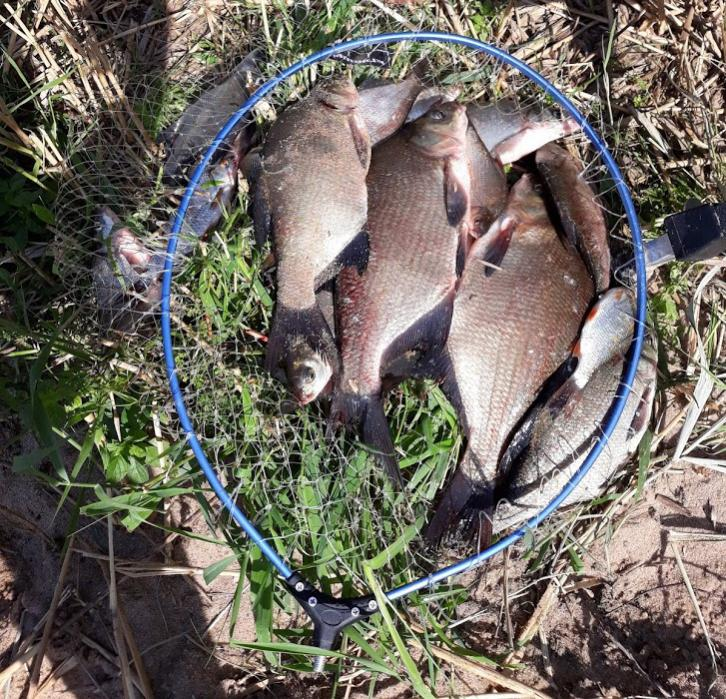 Снова я оказался на ночной рыбалке на Вилейке.На ... | Отчеты о рыбалке в Беларуси