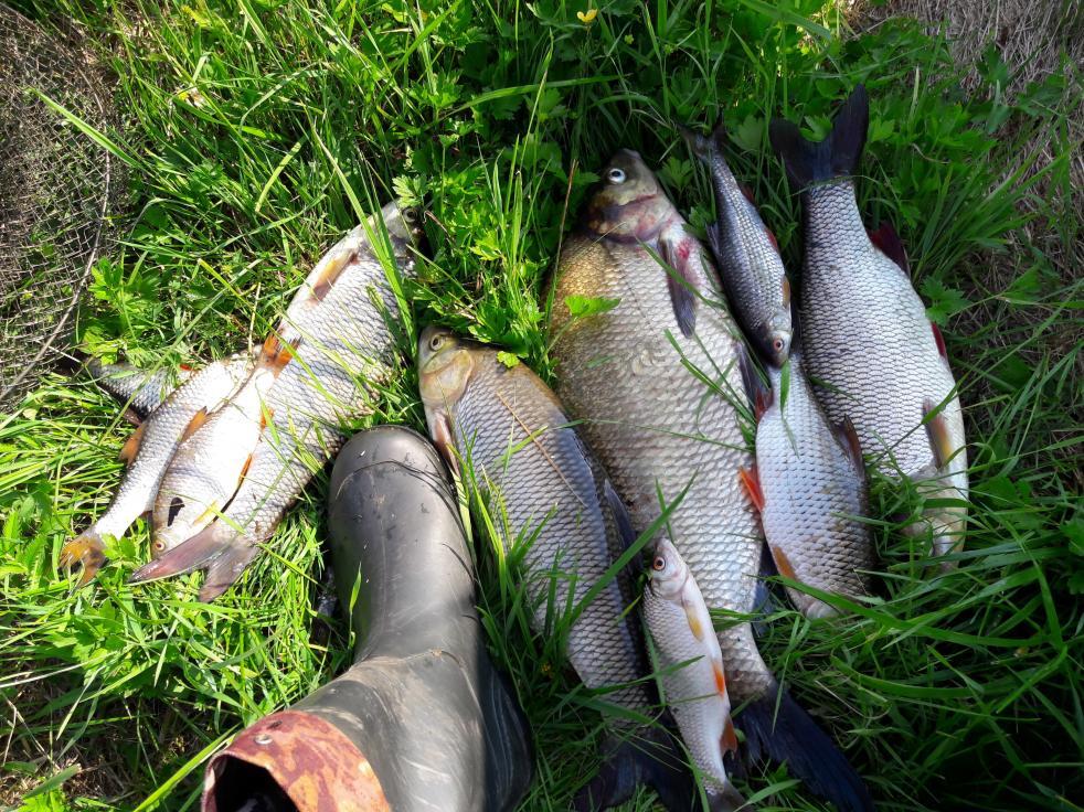 У кожнага з рыбакоў напэўна ёсць свае прыкметы ... | Отчеты о рыбалке в Беларуси