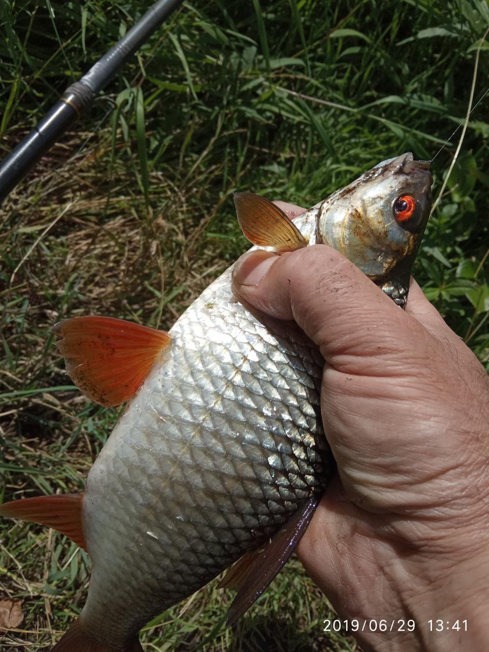 Вчера утром проспал линевую рыбалку, проснулся за полчаса ...   Отчеты о рыбалке в Беларуси