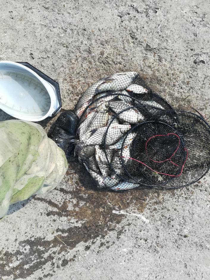 Честно, отчеты тут не доставляют радости и делиться ... | Отчеты о рыбалке в Беларуси