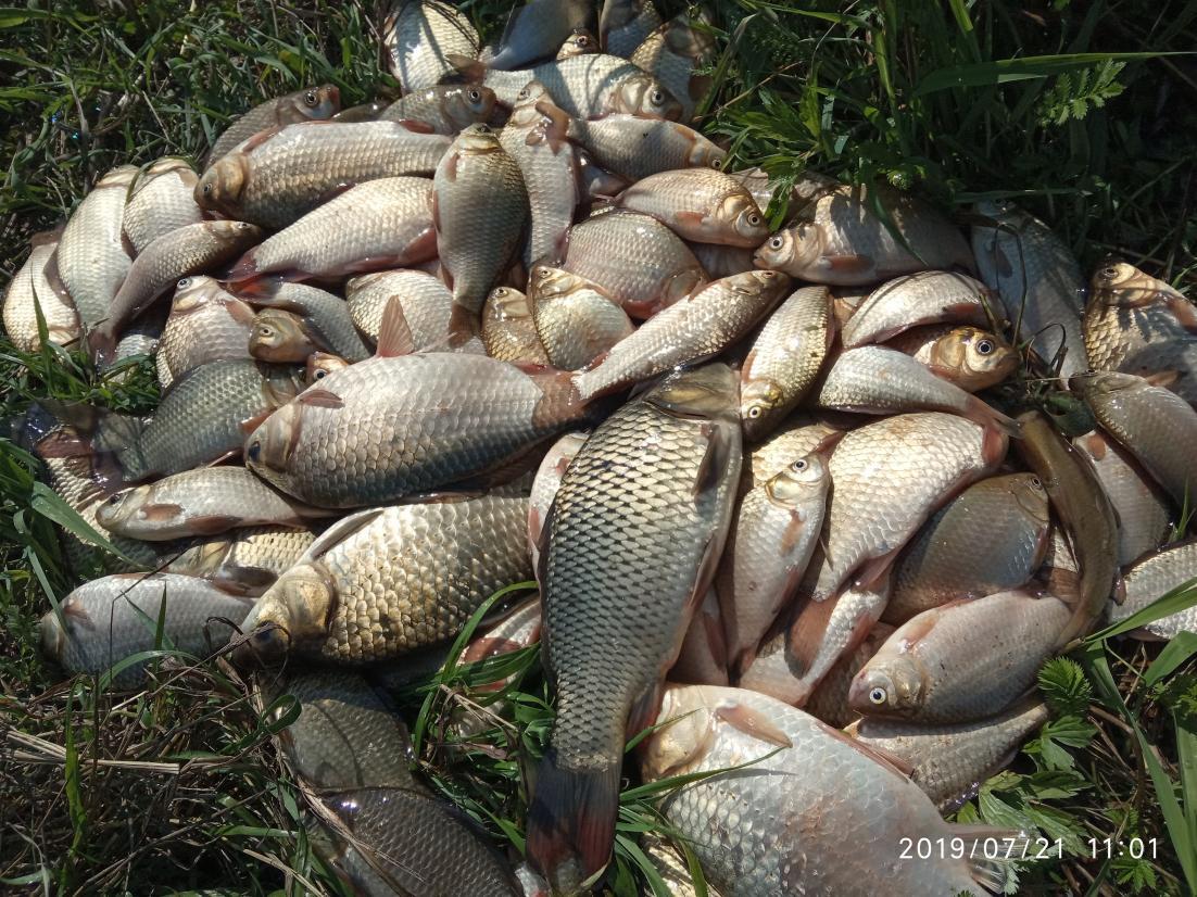 Дубль номер два. Подъем в 3-30, сделал перловки ... | Отчеты о рыбалке в Беларуси