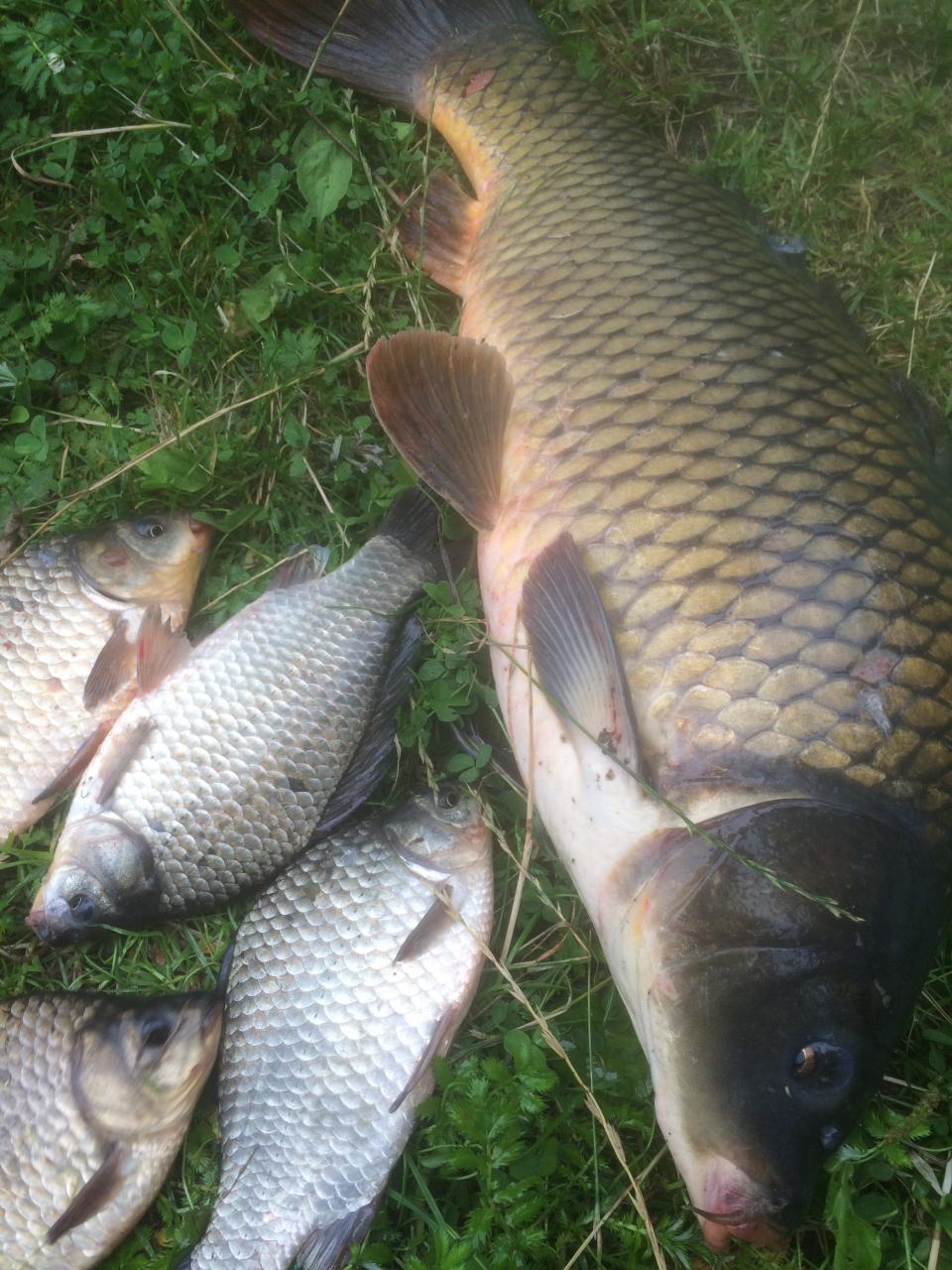 Июль подарил фейерверк приятных мгновений и порой даже ... | Отчеты о рыбалке в Беларуси