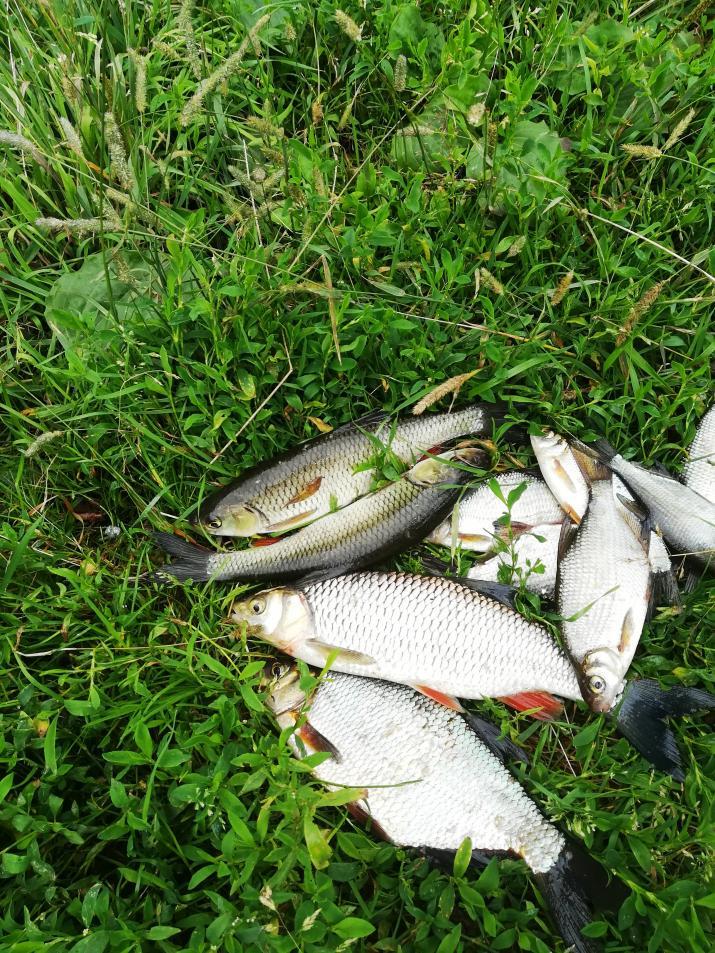 На неделе посетил реку. Был в раене Делятич ... | Отчеты о рыбалке в Беларуси
