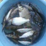 Суровый семейный быт напрочь обломал глобальную рыбалку