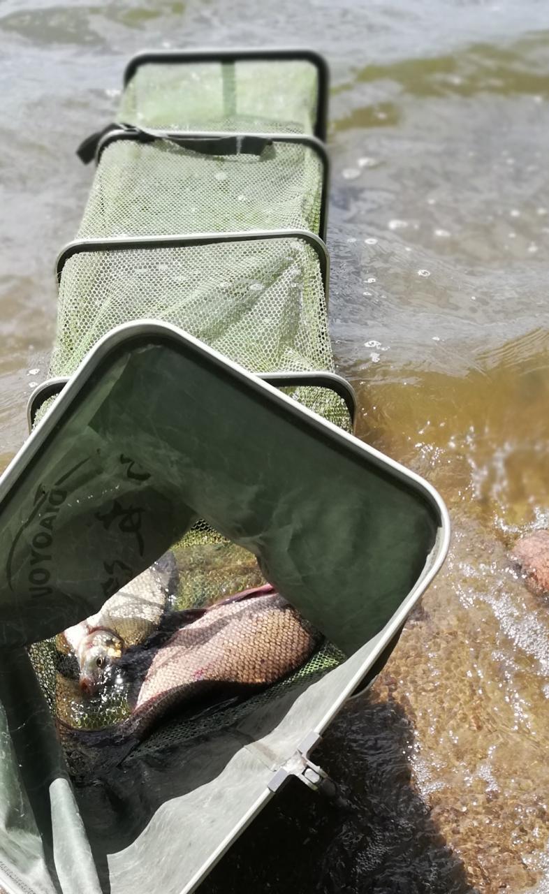 В субботу 29.06. добрался наконец-то до Чижовочки)....Рыбачков совсем ... | Отчеты о рыбалке в Беларуси