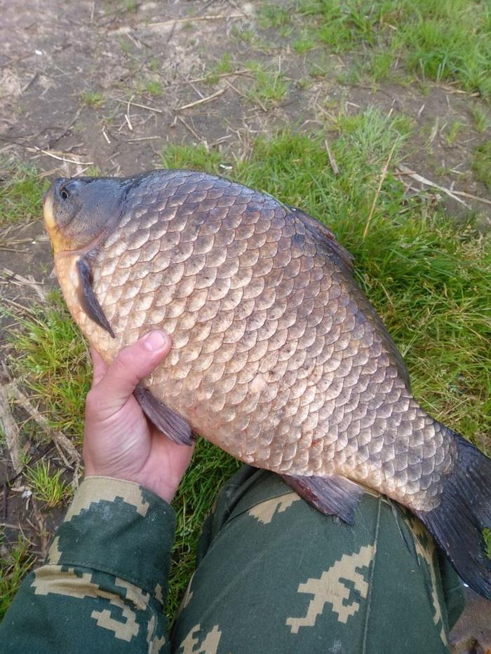 Был на водоёме под Дзержинском ... | Отчеты о рыбалке в Беларуси