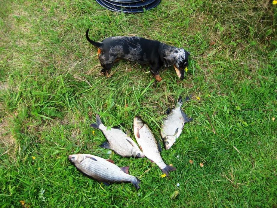 На неделе были семьей на реке, я, жена ... | Отчеты о рыбалке в Беларуси