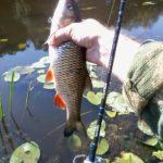 Решили сегодня проверить утреннюю активность рыбы