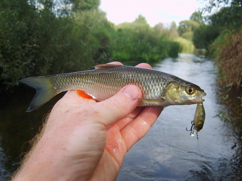 Был с товарищем на рыбалке в субботу ... | Отчеты о рыбалке в Беларуси