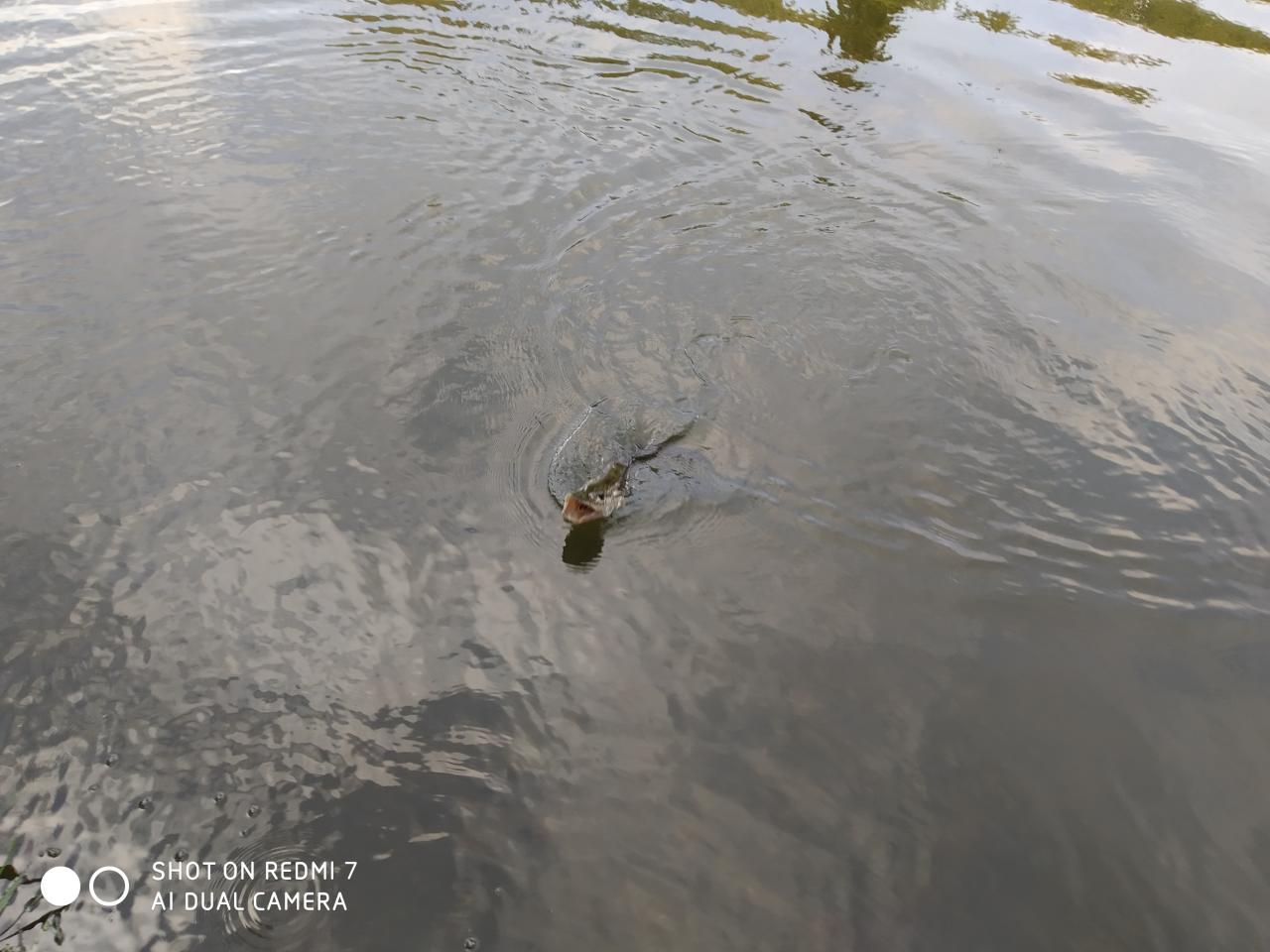 Всем добрый вечер. Вчера рыбачить начал после обеда ...   Отчеты о рыбалке в Беларуси