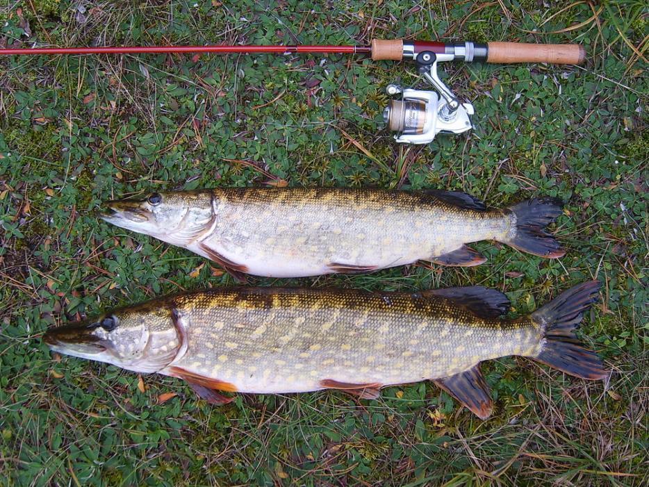 Неудержимая сила потянула меня на рыбалку