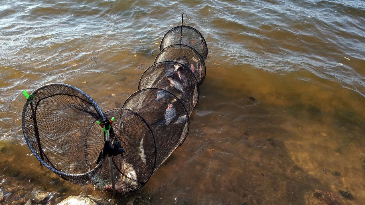 Отчет dranya от 11.10.2019 дал надежды на реванш ... | Отчеты о рыбалке в Беларуси
