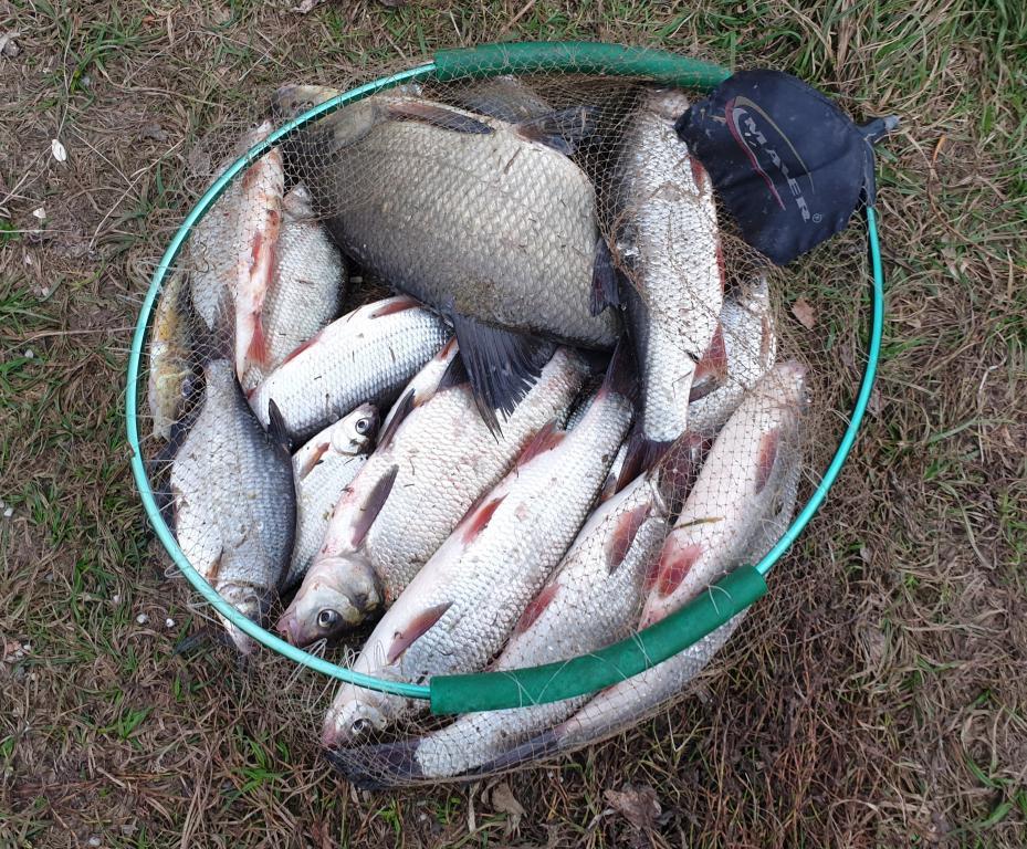 Решил проверить как обстоят дела осенью на Березине.Примерно ... | Отчеты о рыбалке в Беларуси