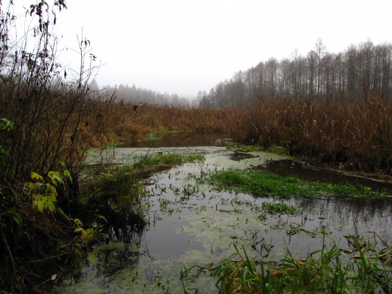 djamПрекрасный день на прекрасной реке. Всего одна поклевка ... | Отчеты о рыбалке в Беларуси