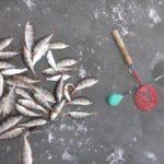 В понедельник удалось выбраться на рыбалку