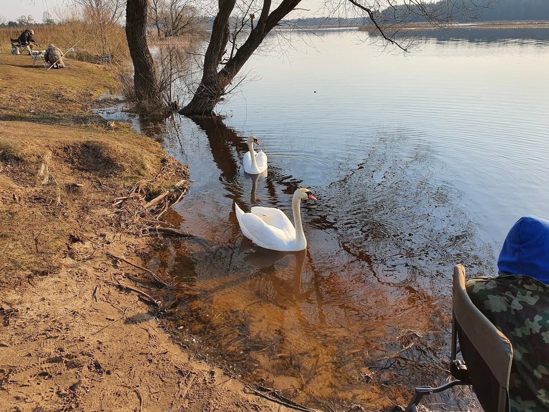 Итак, постараюсь вкратце описать вчерашнюю рыбалку.В это место ... | Отчеты о рыбалке в Беларуси