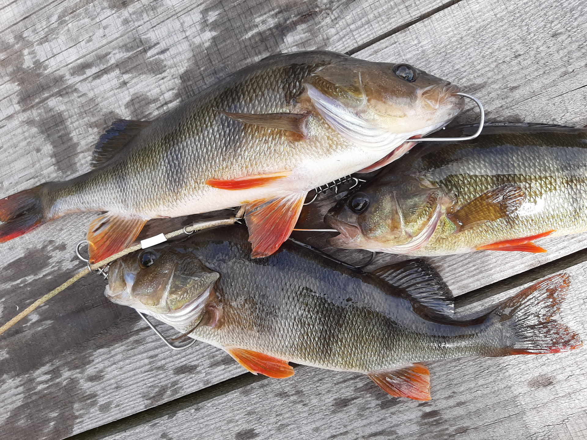 Погода внесла коррективы и выезд пришлось сдвинуть на ... | Отчеты о рыбалке в Беларуси
