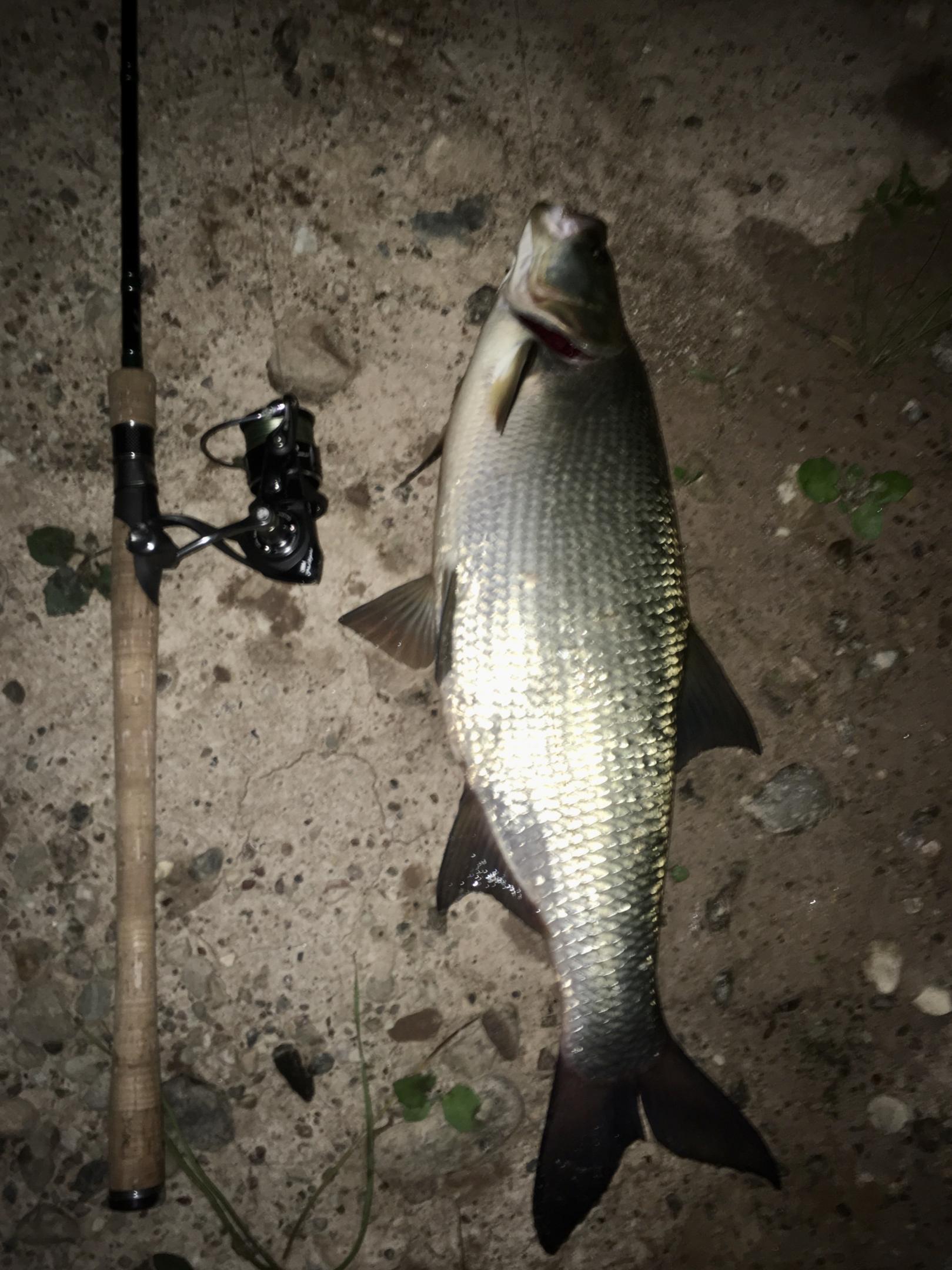 Чиркану и я здесь пару строк о прошедшем ... | Отчеты о рыбалке в Беларуси