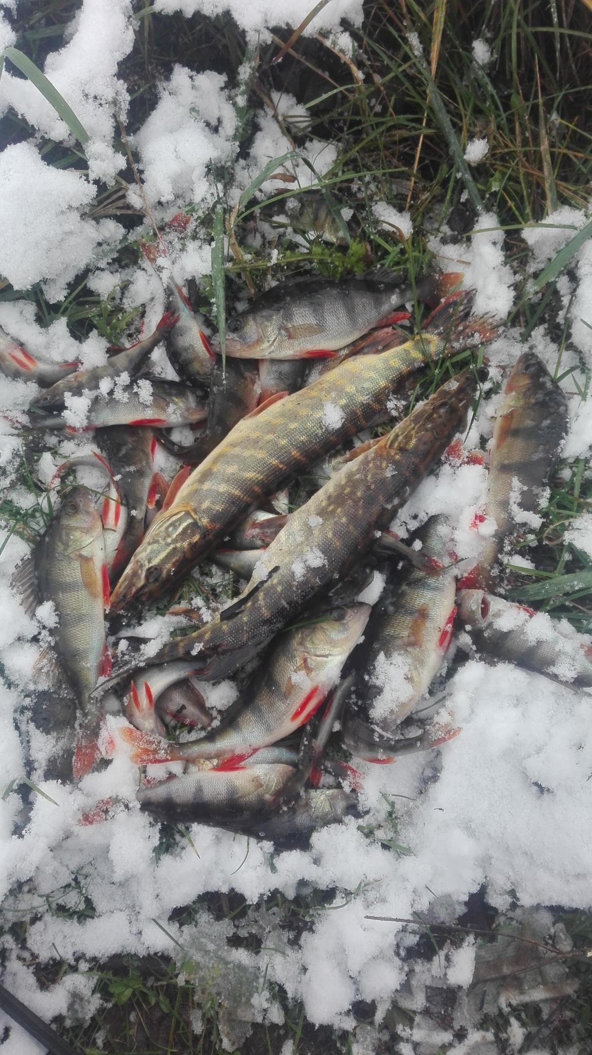 Что ни куда не собирался, то это точно ... | Отчеты о рыбалке в Беларуси
