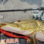 Как правило, большинство из рыболовов для ловли щуки использует