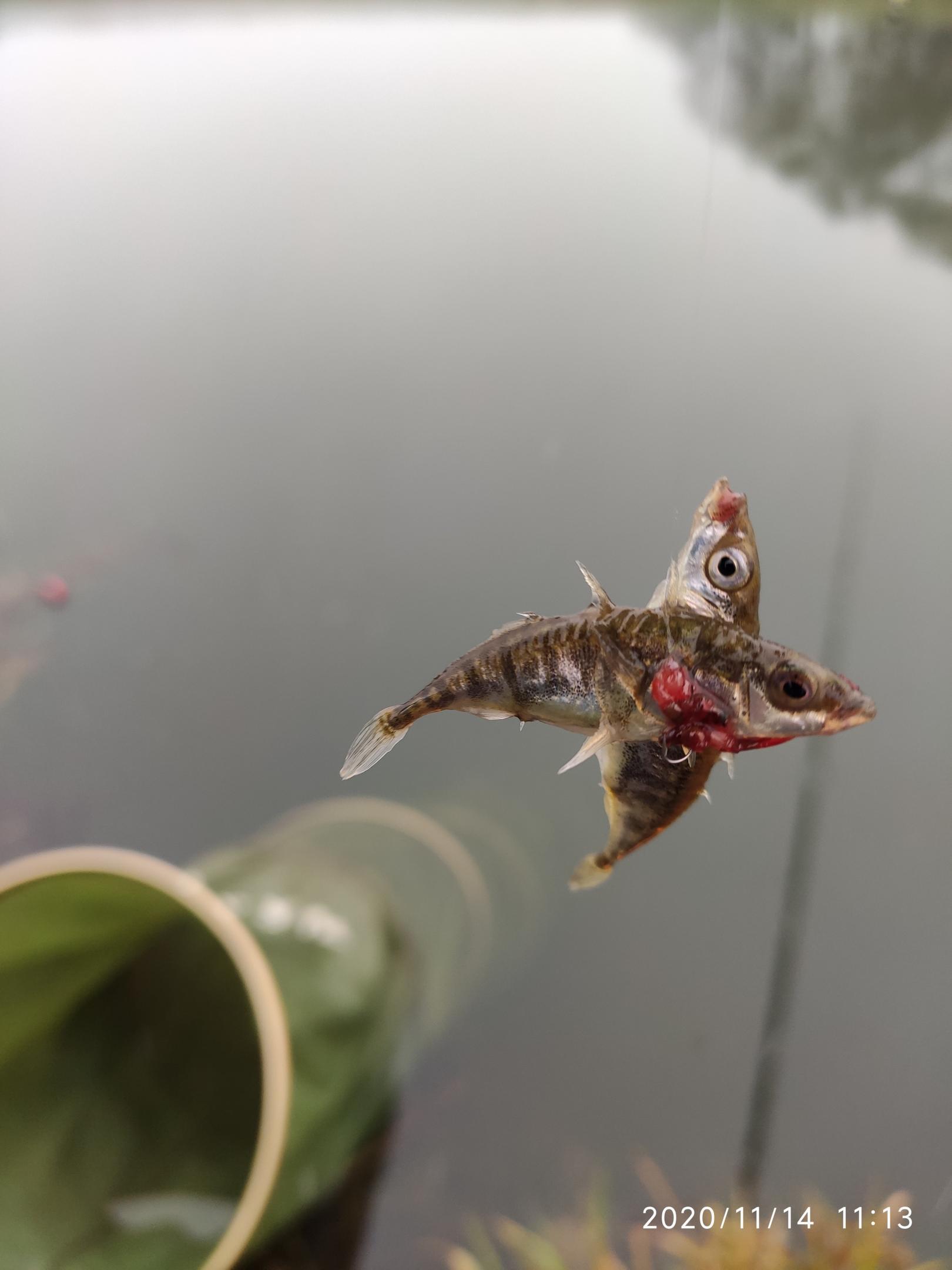 Сегодня был на канале в Заславле. Первый раз ... | Отчеты о рыбалке в Беларуси