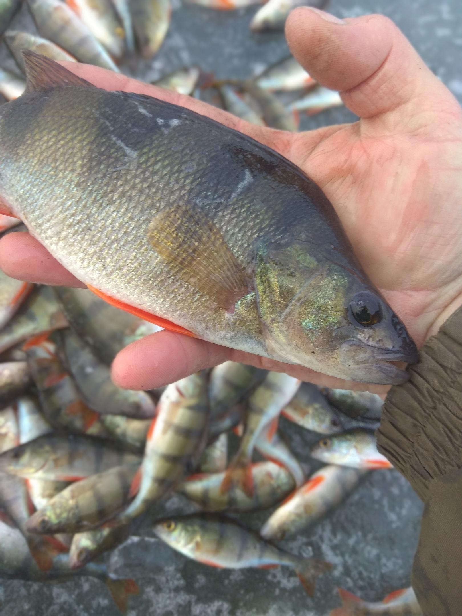У меня в этом году чередование районов. Сразу ... | Отчеты о рыбалке в Беларуси