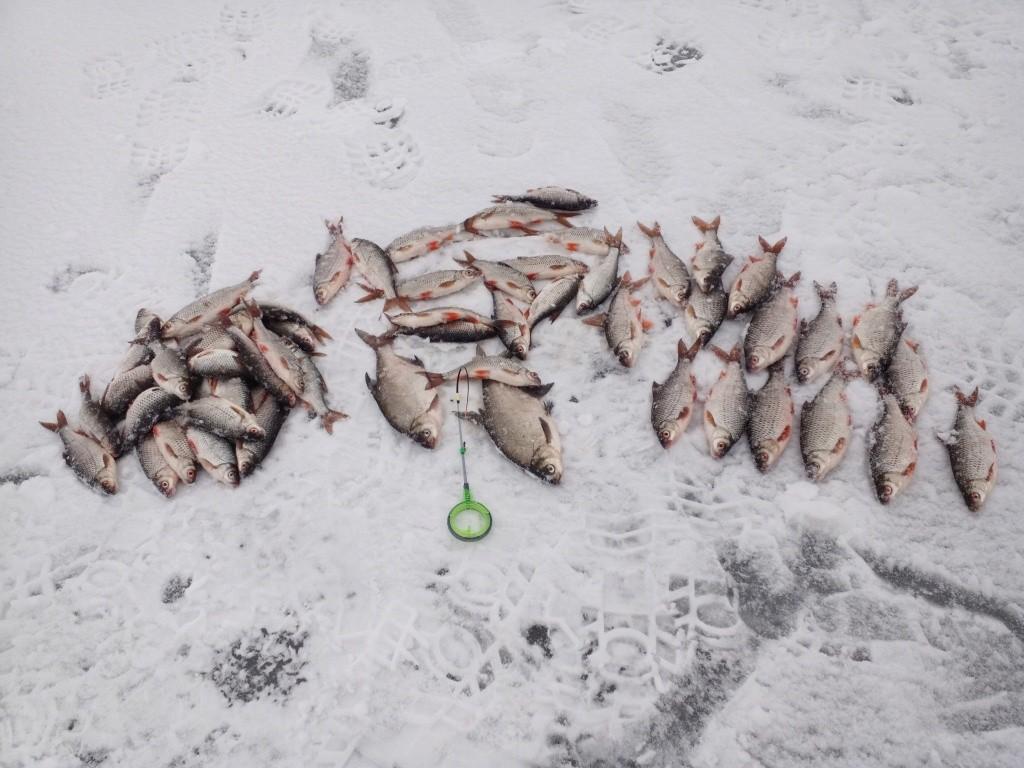 Был на Море три дня подряд - 5,6 ... | Отчеты о рыбалке в Беларуси