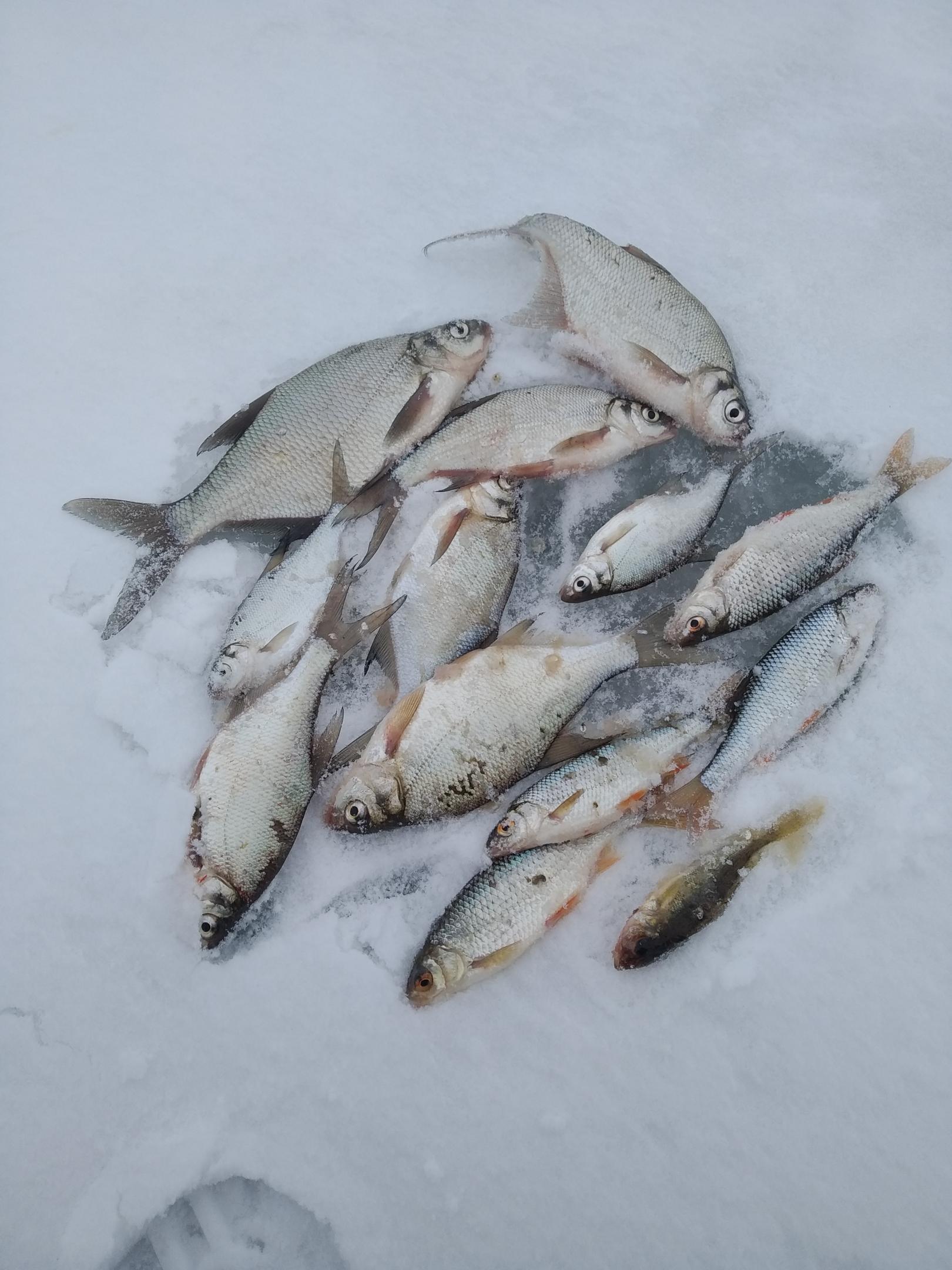 Были сегодня вместе с сыном. Других задач не ... | Отчеты о рыбалке в Беларуси
