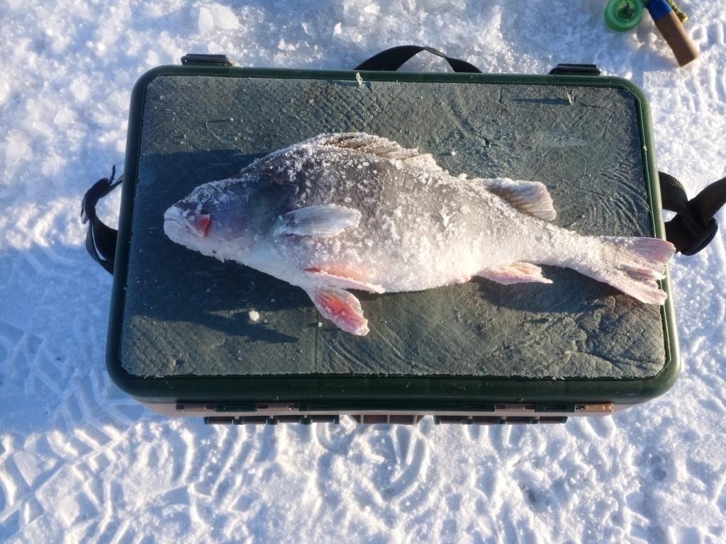 Денек сегодня был душевный, солнышко светило, морозик с ... | Отчеты о рыбалке в Беларуси