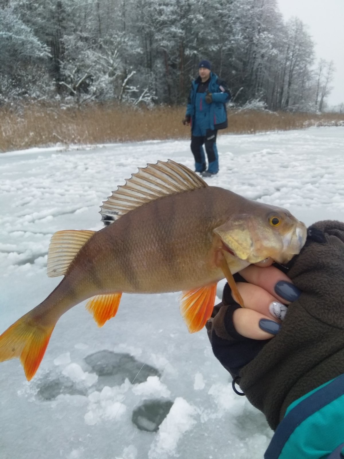 Итак, какой Новый Год без рыбалки для рыбака? ... | Отчеты о рыбалке в Беларуси