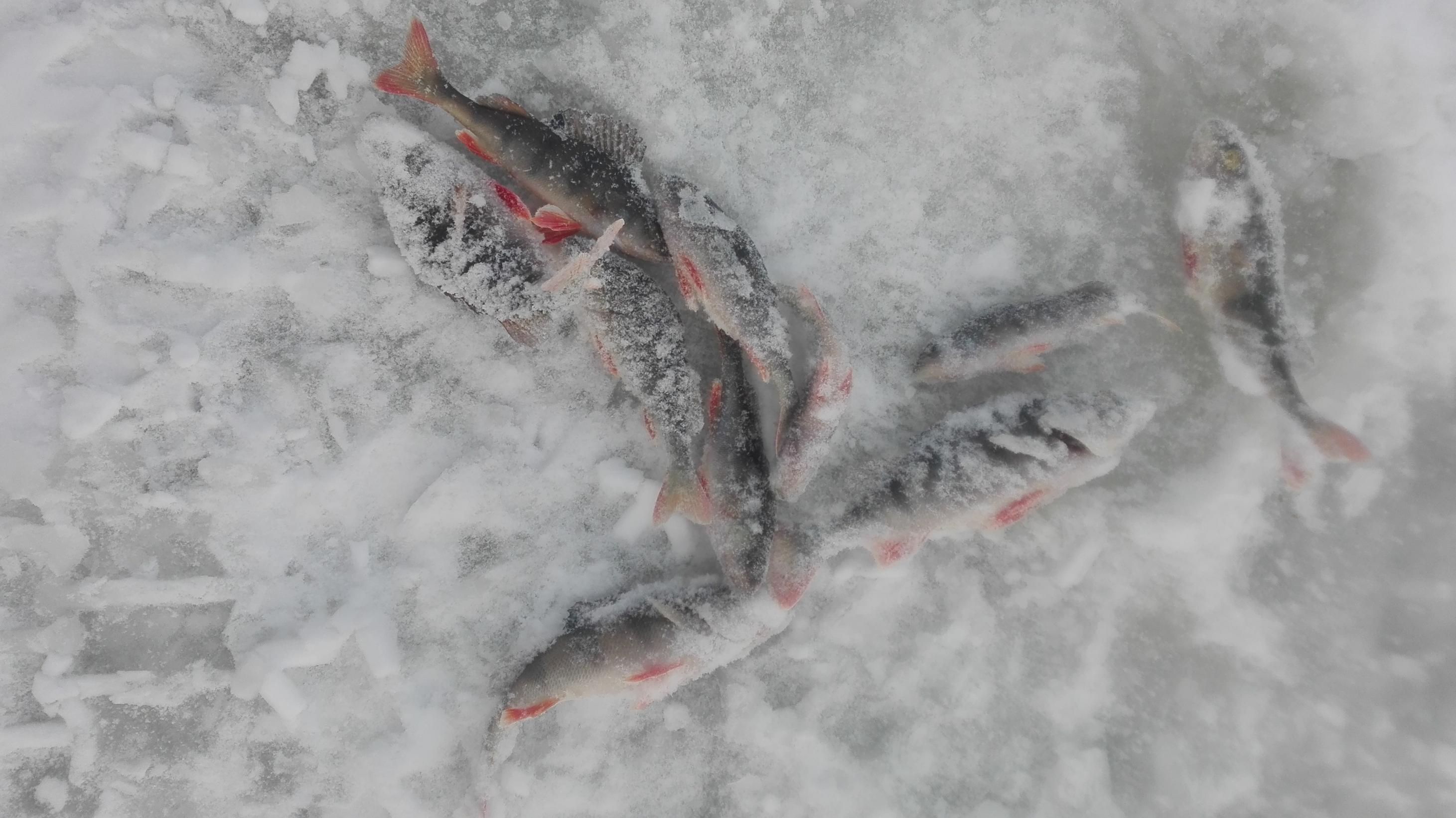 Мороз абсолютно не важен, главное раз за два ...   Отчеты о рыбалке в Беларуси