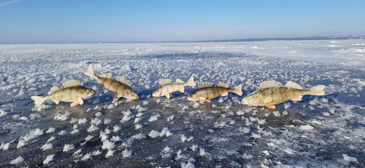 Не были зимой на Нарочи лет 7. Соскучились ... | Отчеты о рыбалке в Беларуси