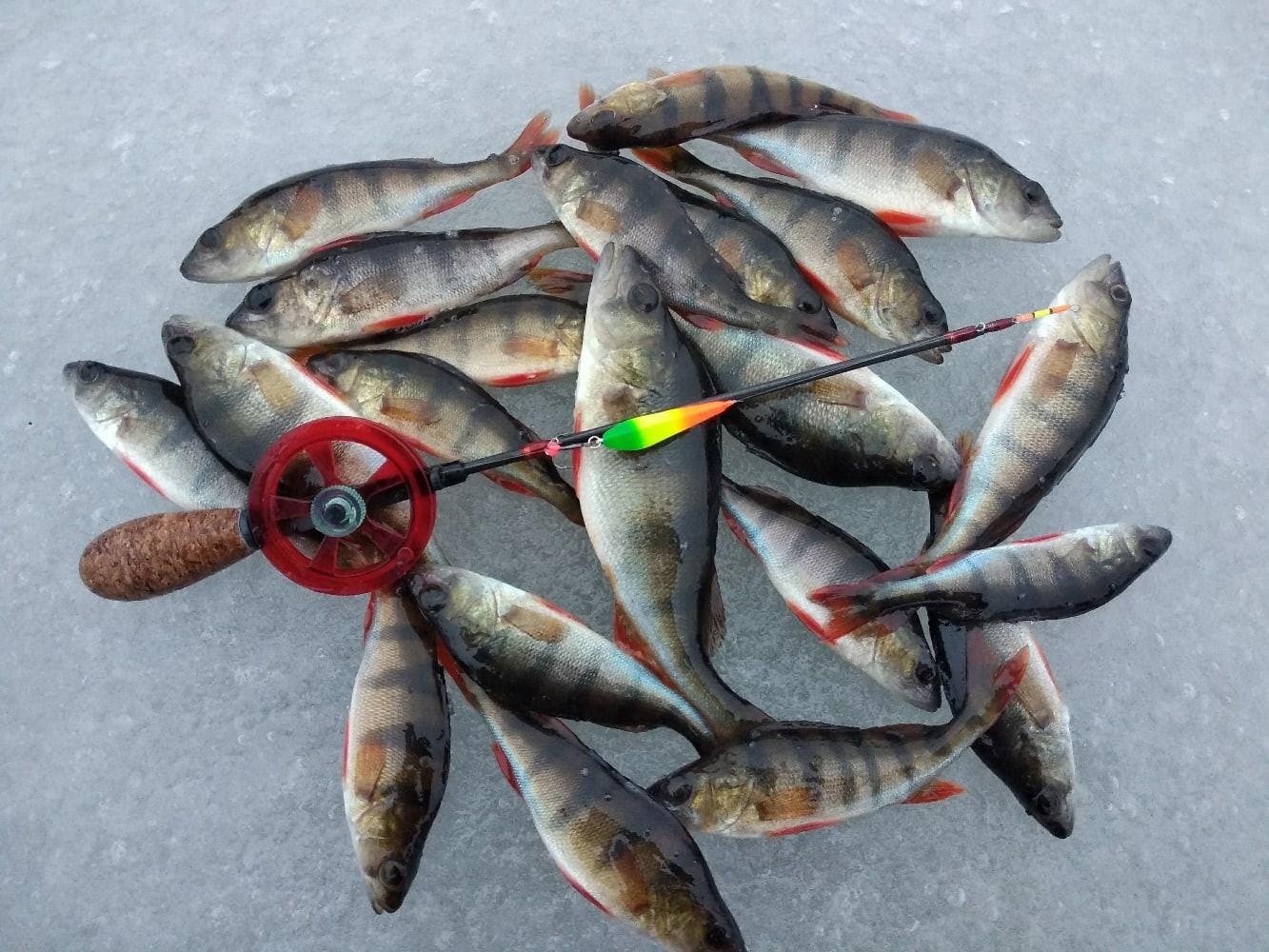 Провели несколько дней на одном из озёр Браславщины ... | Отчеты о рыбалке в Беларуси